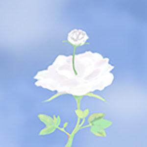 薔薇の中から薔薇が咲く