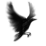 羽ばたくカラス